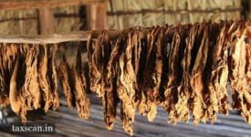 Dried Tobacco Leaves - Taxscan