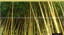 Aatma Nirbhar Bharat - Custom duty - Bamboo - Taxscan