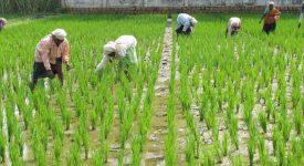 Karnataka High Court - Cash Payments Agriculturists - Farmers - land - Taxscan