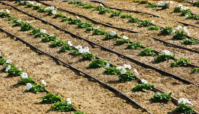 drp - GST- Sprinklers - Drip Irrigation System - CBIC - taxscan