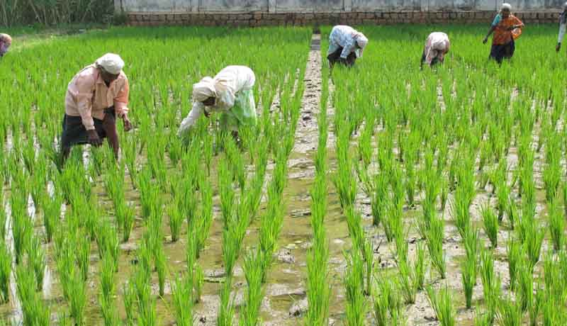 DGFT - TMA Scheme - agricultural products - Taxscan
